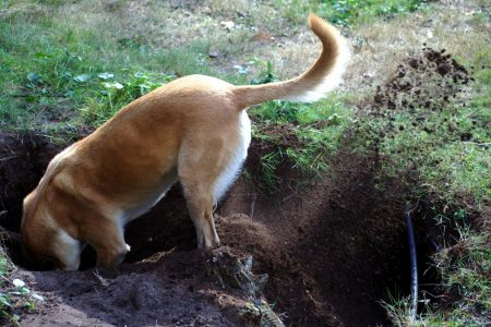 How to Deal With Your Dog's Incessant Digging