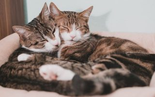 10 things that make owning multiple cats easier